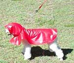 Rain Coats for Dogs