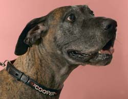 Cooper with Personalized Dog Collar